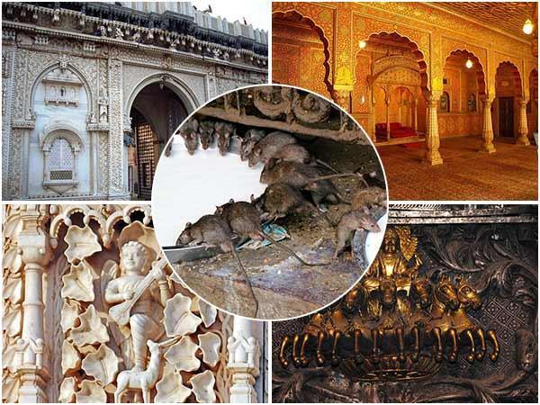 रहस्यों से भरा राजस्थान का विश्वपरसिद्ध अनूठा करणी माता मंदिर